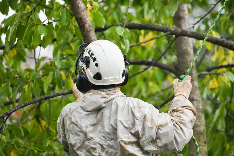 OC Tree Service Pros