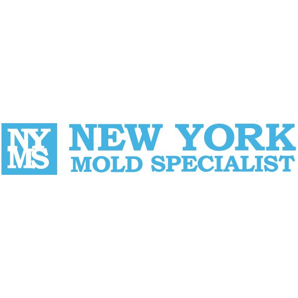 New York Mold Specialist