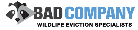 Bad Company Wildlife Eviction