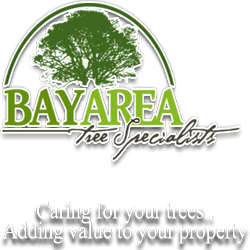 Bay Area Tree Specialists