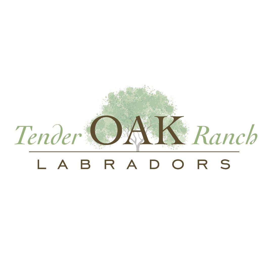 Tender OAK Labradors