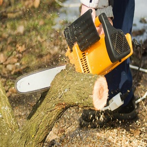 Melbourne East Tree Services