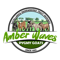 Amber Waves Pygmy Goats