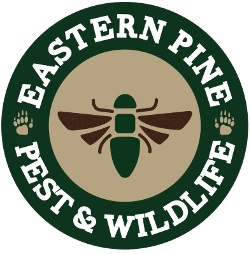 Eastern Pine Pest Control
