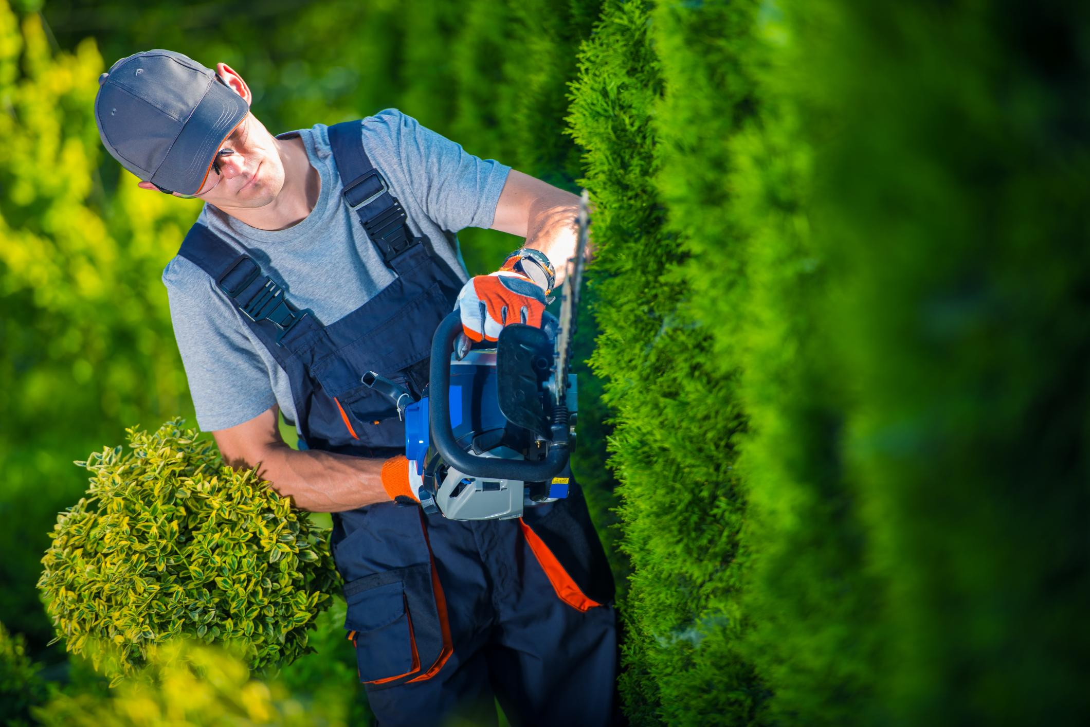 Top Tree Service Cincinnati
