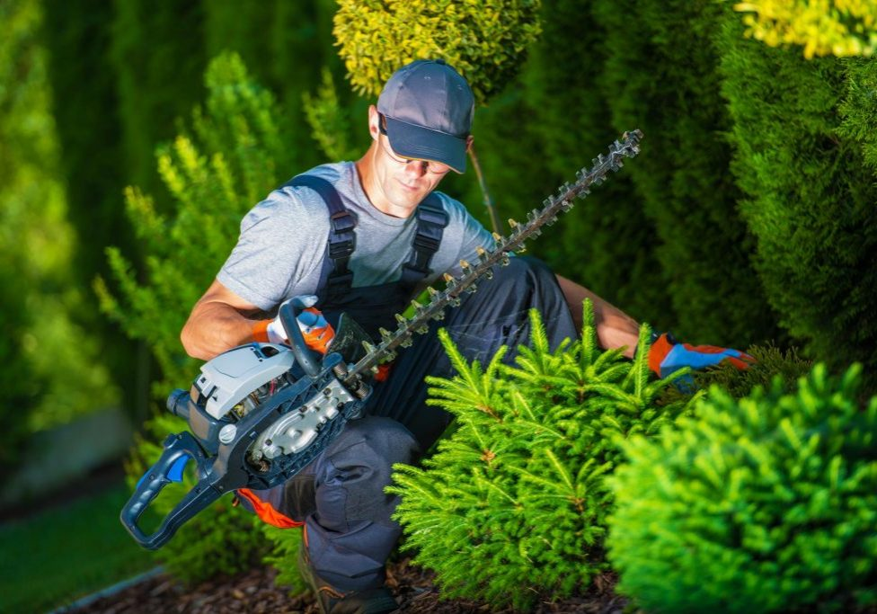 Top Tree Service Albuquerque