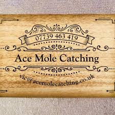 Ace Mole Catching