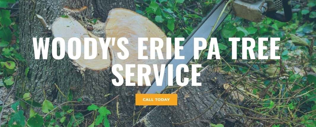 Woody's Erie Pa Tree Service
