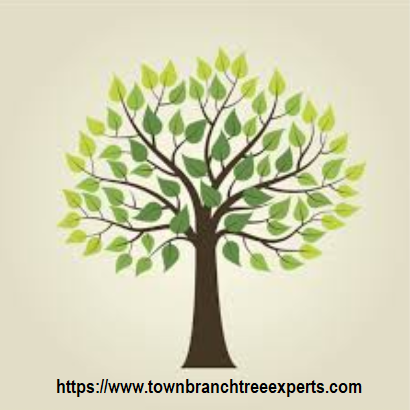 Town Branch Tree Expert