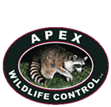 Apex Wildlife Control LLC