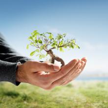 H & H Tree Services Inc.