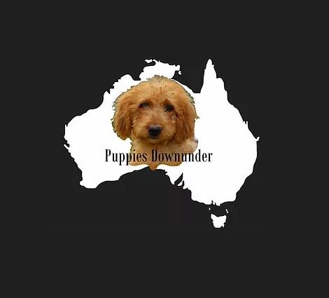 Puppies Down Under