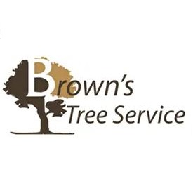 Arlington Tree Service Experts