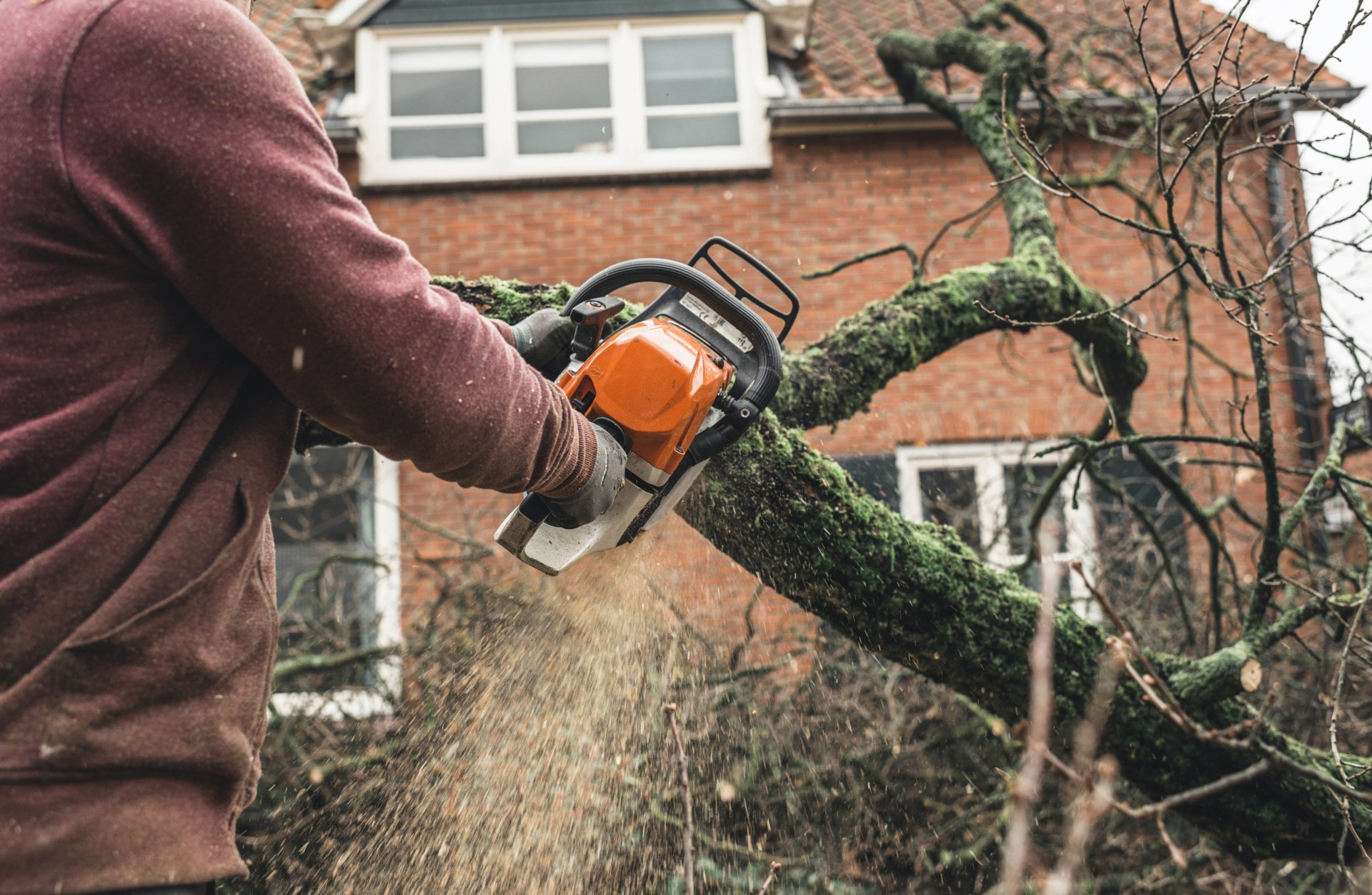 Tree Service St Louis