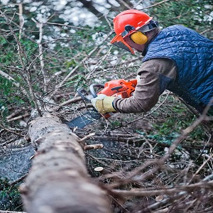 Pittsburgh Tree Service Experts