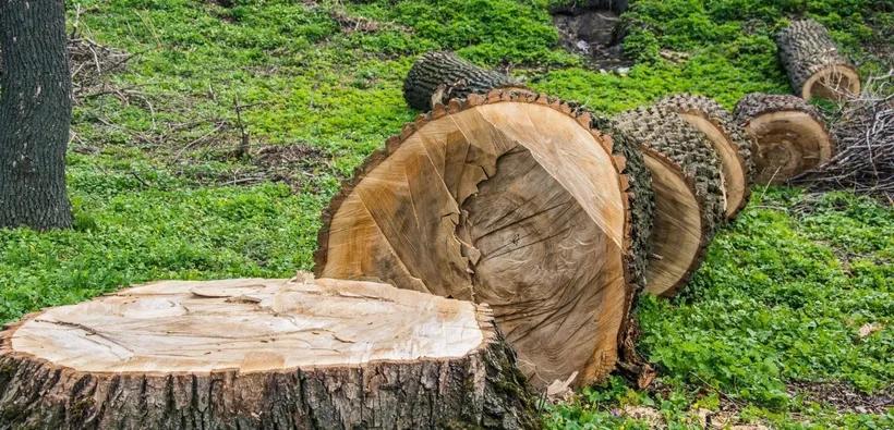 Frankston Tree Removal