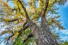 Cedar City Tree Service