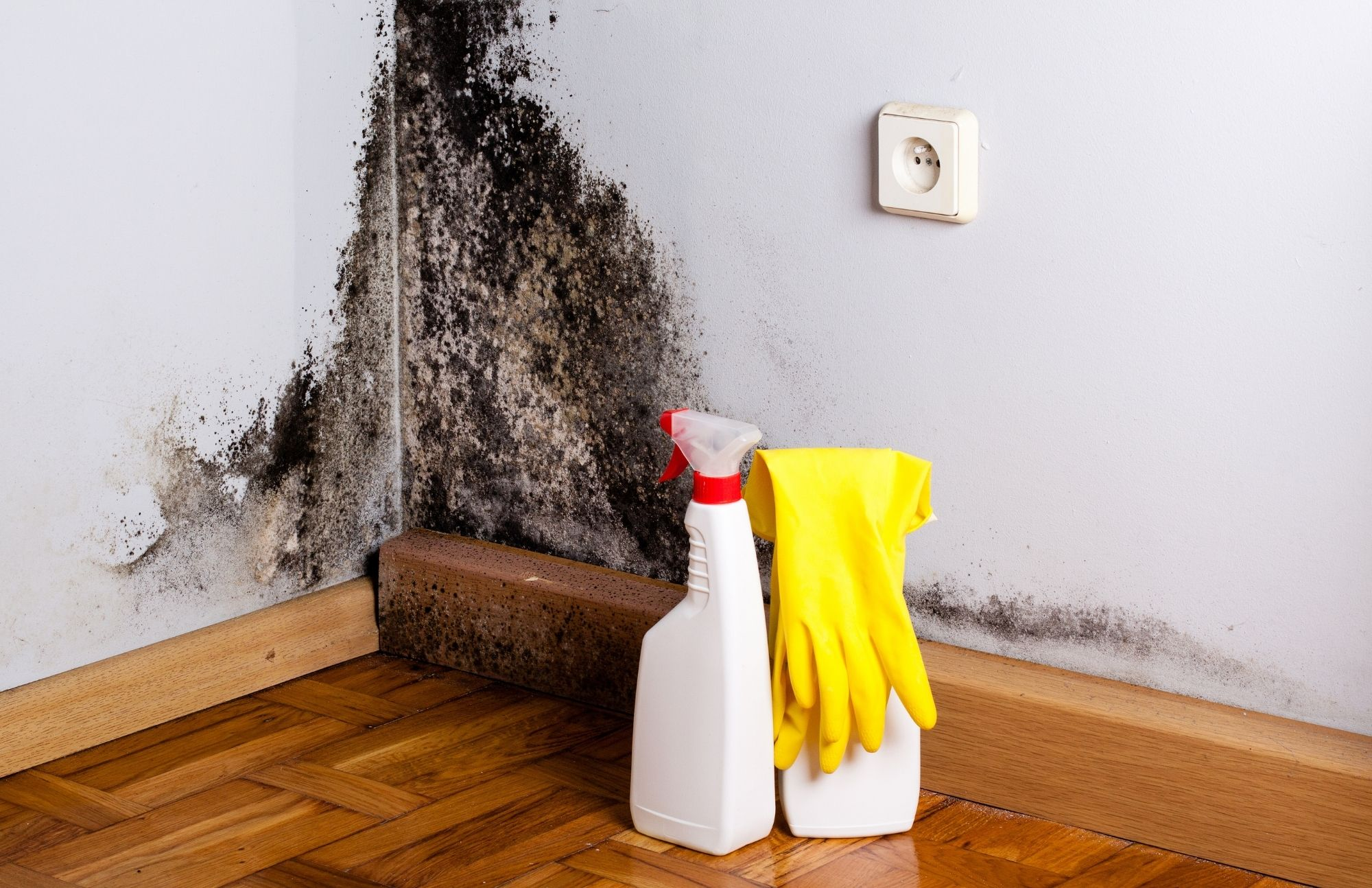 Houston Mold Removal