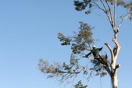 Whittier Tree Service Company