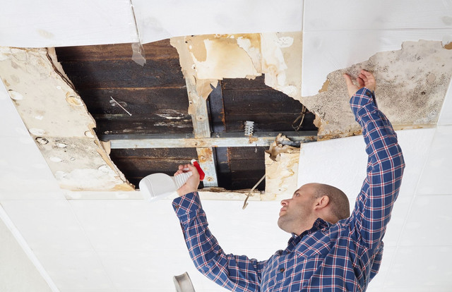 Charlottesville Mold Removal