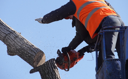 Tree Services of Fullerton