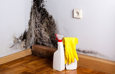 Raleigh Mold Removal