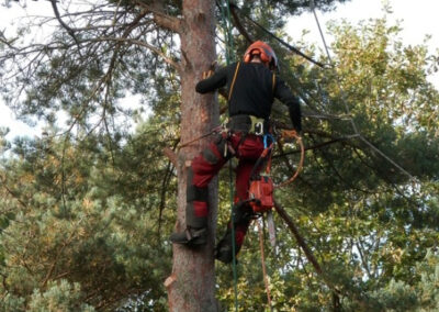 Lake Forest Tree Care