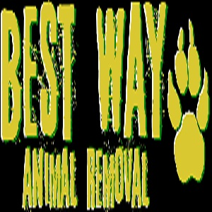 Best Way Animal Removal