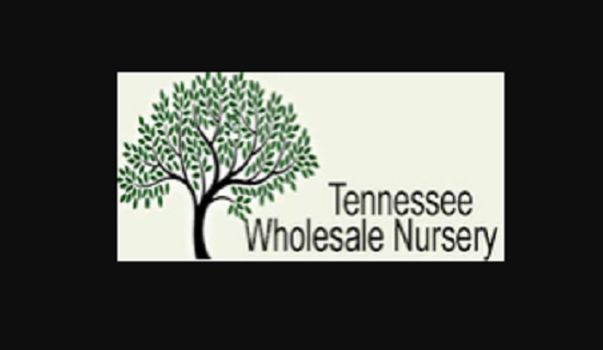 Tennessee Wholesale Nursery LLC
