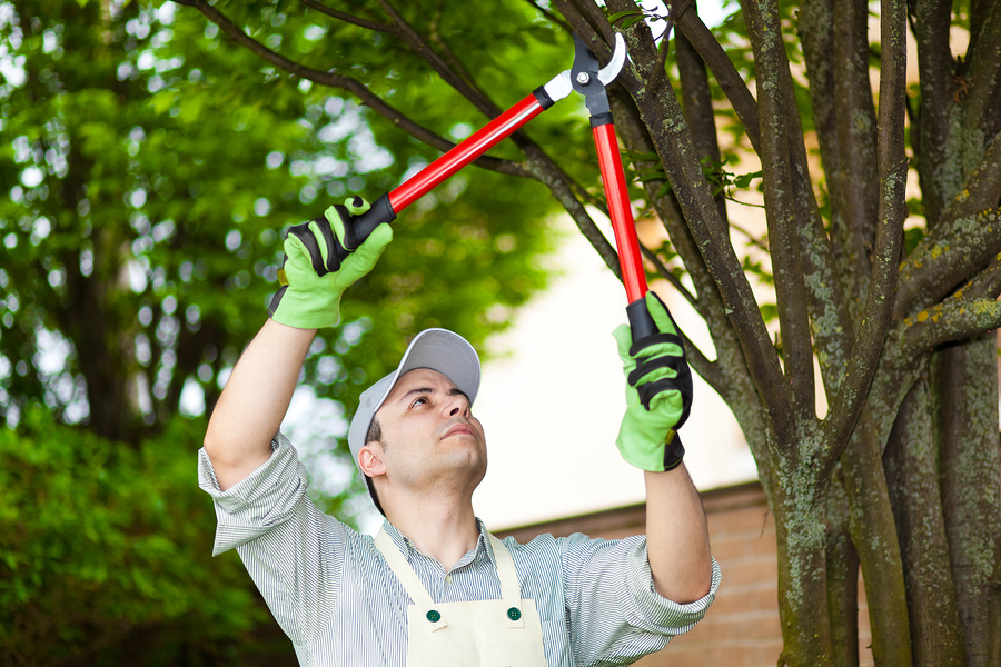 Top Tree Service Seattle