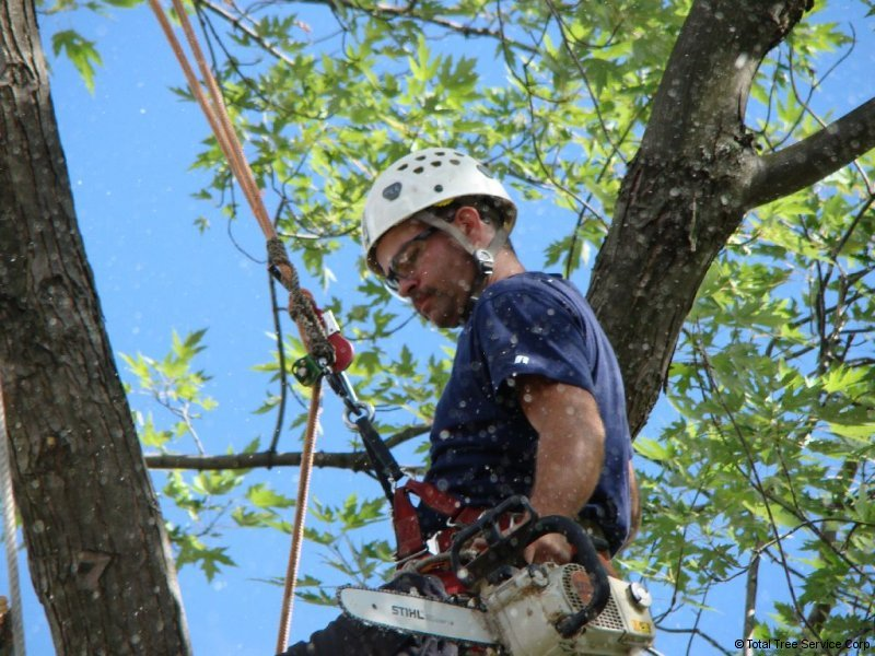 P & P Tree Service Baltimore