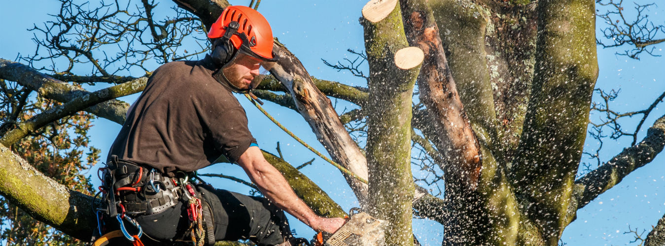 Thrift Washington Tree Service