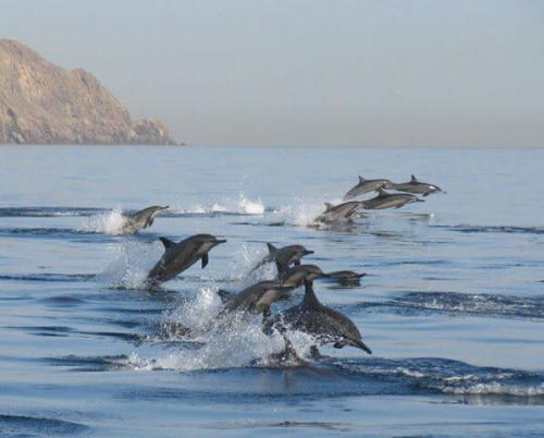 Dolphin Watching Tour in Muscat